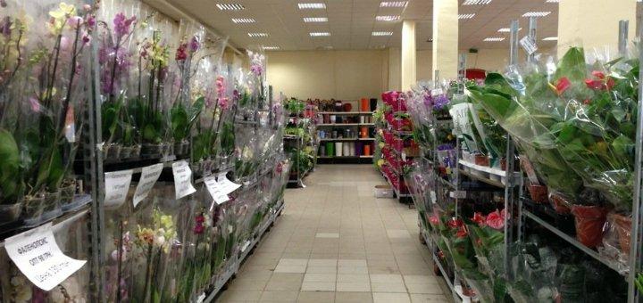 Магазин цветов для вас киев клеманская #11