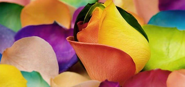 Марта магазин цветов днепропетровск камелия на позняках магазины