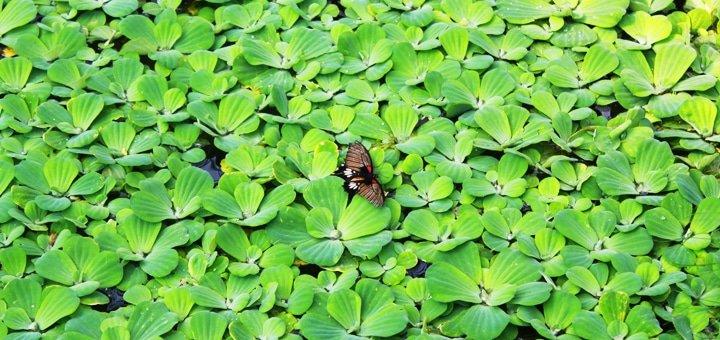 Скидка 50% на билеты тропической выставки «Эдемский сад»
