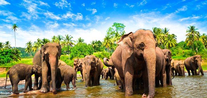 Скидка 30% на трекинг по Шри-Ланке от компании «LuckyFox Travel»