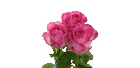 Магазин цветов днепропетровск камелия на позняках — img 5