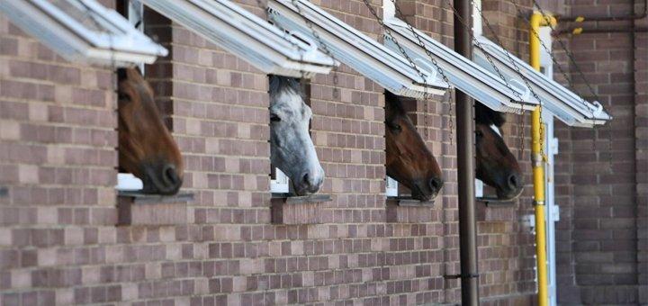 2 дня VIP-отдыха с завтраками и катанием на лошадях в комплексе «Конюшня Бутенко» под Киевом