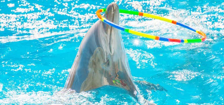 Скидка 50% на дневное шоу «Единая Планета» в дельфинарии «НЕМО»